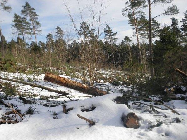 """Корупція у карпатських лісах: за нової влади """"рубають"""" більше"""